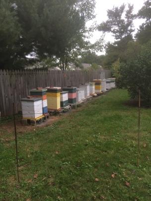 Bonsells Bees!